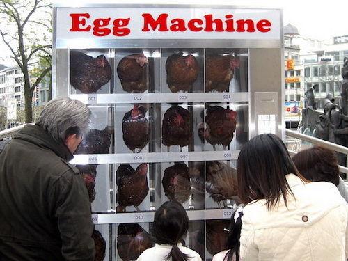 最新鮮的雞蛋是來自那?