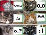 各種給力貓咪MSN和真實表情