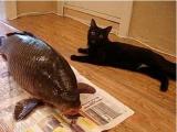 竟然有貓是不吃魚的!