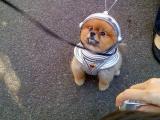 主銀,地球太危險了,我們還是快點回火星吧。