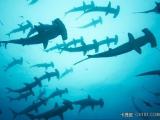 十種奇怪鯊魚 - 其中一種 吞食北極熊! 很可怕!!!