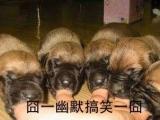 這些狗狗餓了