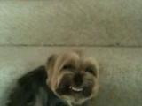 每天回家...我的狗都這樣對我微笑