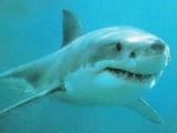 面對鯊魚,男友把女友推進海裡!
