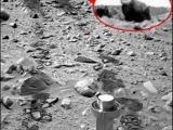 火星疑似發現銀背猩猩!