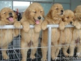 狗狗世界的怡紅院