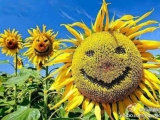 每天笑一笑,生活多美好