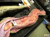 這蛇吃什麼玩意兒啊???