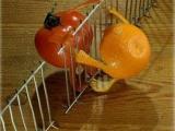 超牛創意水果! 必看!