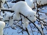 北極熊在樹上?