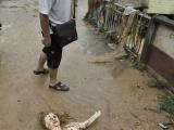 洪水帶來的驚喜