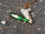 喝醉的小松鼠