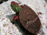 忍者龜誕生