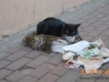 貓咪也要討飯吃