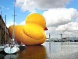 巨大小鴨現大阪市區!