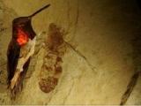 科學家在美國發現巨型螞蟻化石
