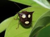 自然界七種長有人臉的小昆蟲