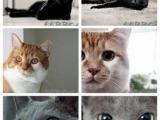 貓咪的眼瞳