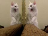 就沒見過我這麼漂亮的貓了