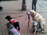 我帶你們去散步吧!