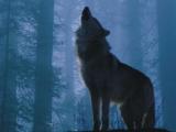 選狼還是獅子?有趣的心理學問題!