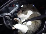 叫我穿這樣要如何開車?