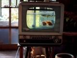 電視機的妙用