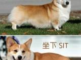 有一種狗,牠一生都沒辦法站起來,但牠到底怎麼生活呢??