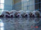 五隻可愛的小狗