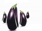 您知道茄子跟膽固醇息息相關嗎?