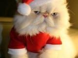 真實版+ 超可愛 (聖誕貓咪)