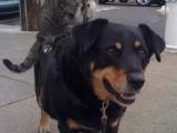 喂! 貓先生, 夠了吧!!