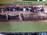 我沒有看過那麼大的鱷魚
