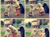和諧的人與狗