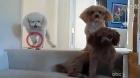 三隻狗的對話