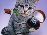 貓貓教你做人的道理