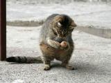 在路上見到一隻屬松鼠的貓.....