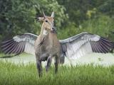 神獸 飛馬
