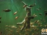 亞馬遜河的食人魚吃羊