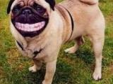 是什麼笑這麼開心?