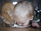 好像是小孩跟貓搶?又好像是貓跟小孩搶?