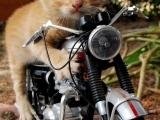 小貓咪的新式摩托車