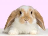 兔年吉祥話