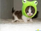 可愛貓貓表情秀