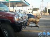 這是神馬牌子的車?