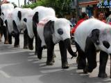 泰國大象假扮熊貓!超強!