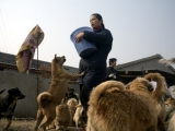 中國寵物愛心人 收養 1500隻狗 200之貓