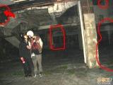 台中大坑卡多裡...圖片放大你會發現 她們都看著鏡頭!