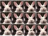 不一樣表情的兔子