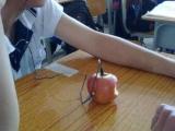 據說~ 昨天開始賣白蘋果啦。我覺得蘋果還是紅的好啊 ~